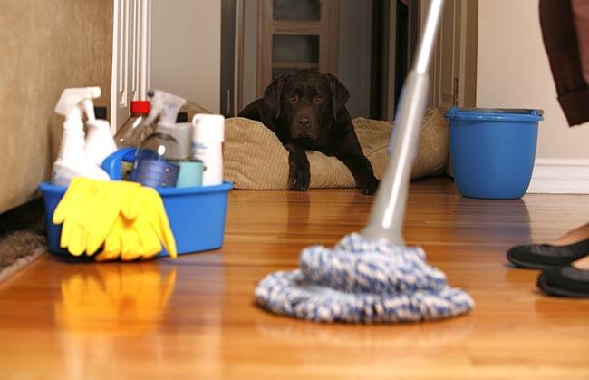 تنظيف الأنتريه والسجاد