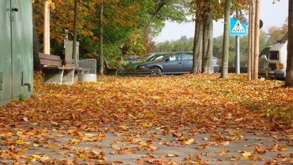 بدء فصل الخريف