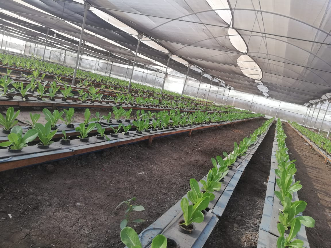 مشروعات بحثية في مجالات الزراعة والغذاء