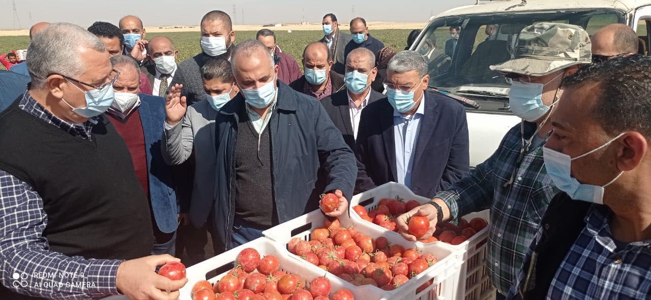 افتتاح مزرعة الطماطم بالمنيا