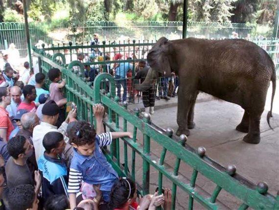 حديقة الحيوان أرشيفية