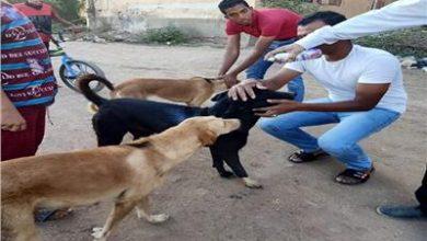 حملة تطعيم الكلاب