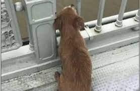 كلب ينتظر صاحبه