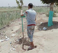 احد ابناء قرية الصلعا اثناء دهن احد الاشجار