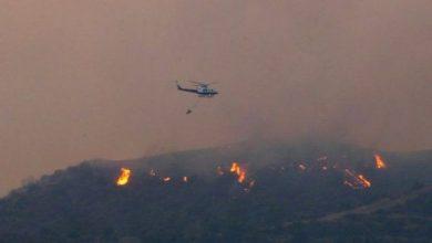 ضحايا حريق غابات قبرص
